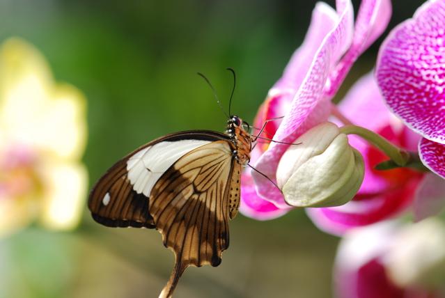 butterfly-101