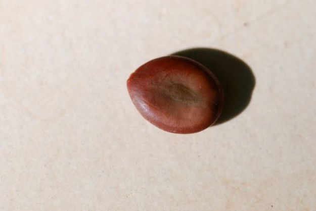 mystery-seed-187-1