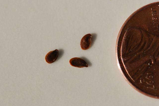 mystery-seeds-185-size