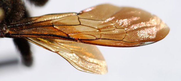 mystery-insect-wing-200