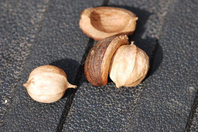 mystery-seeds-193