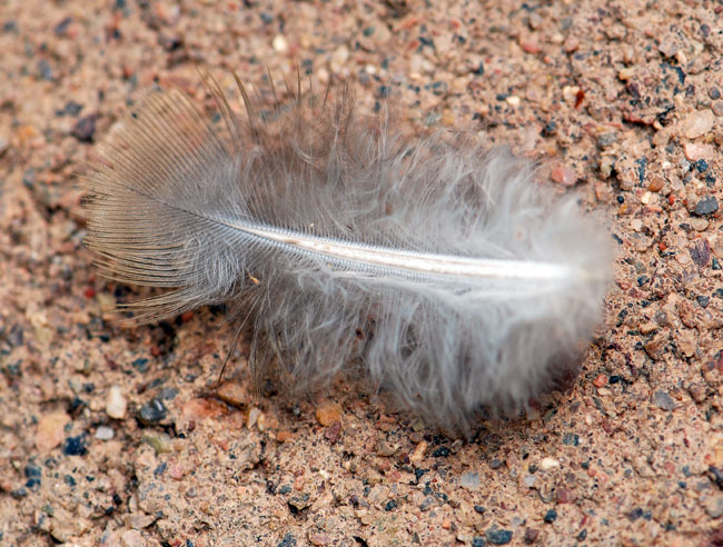 feather-fuzzy