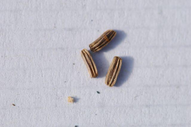 mystery-seeds-232