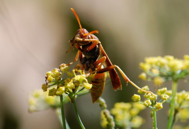 wasp-for-list