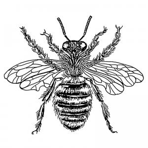 Bee_-_queen_(PSF)