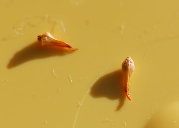 mystery-seeds-238-2