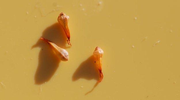 mystery-seeds-238-3