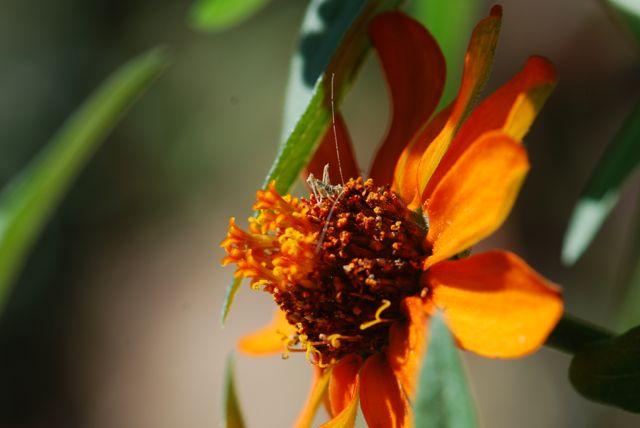 katydid-nymph-brown-march