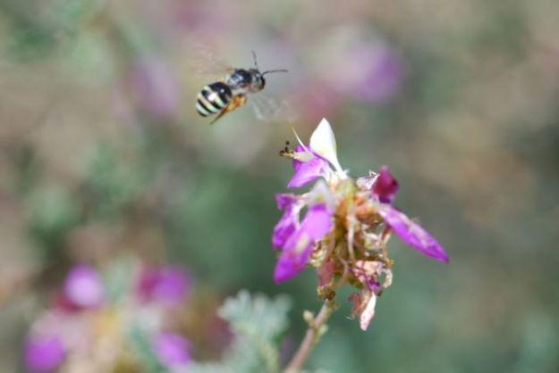 flying-bee-0071