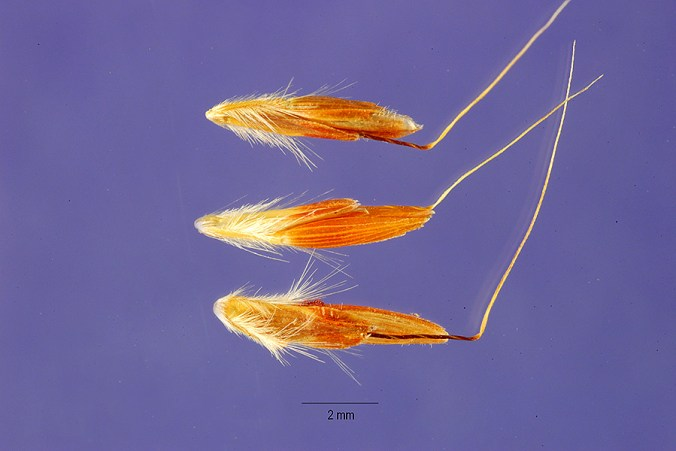 mystery-seed-257