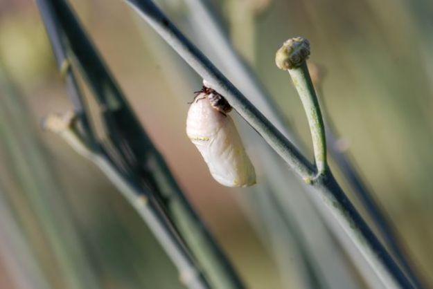 queen-chrysalis-003