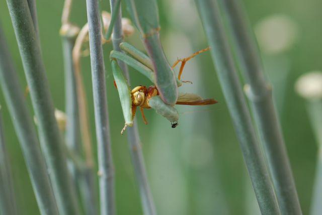 praying-mantis-fly-on-head-0343