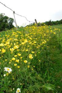 plants-in-field