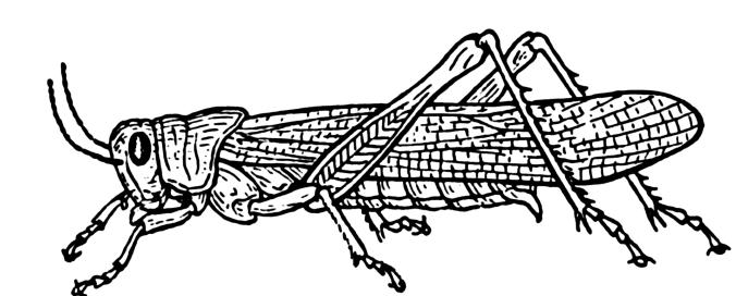Grasshopper_(PSF)