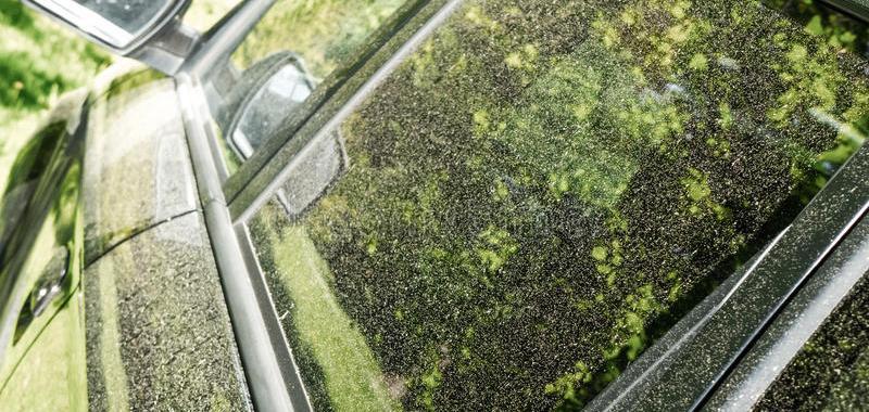 Pollen : La bonne méthode