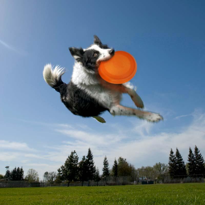 throw-bowl-3