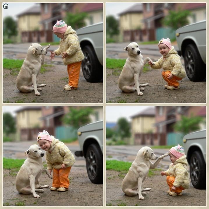 aaaaaaaaawn-car-child-cute-dog-hand-Favim.com-60672