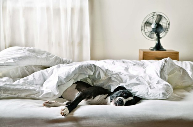 Image result for dogs in bed