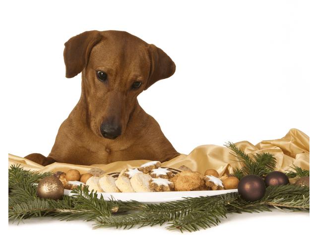 festive menu