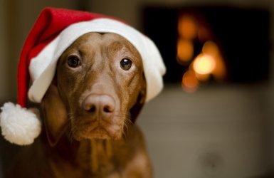 christmas safe