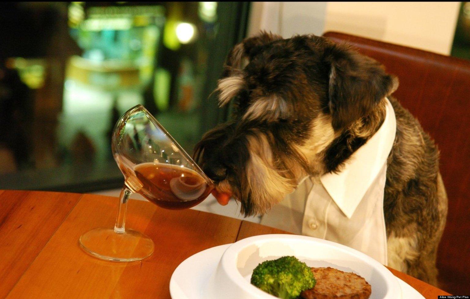 o-DOG-FOOD-facebook