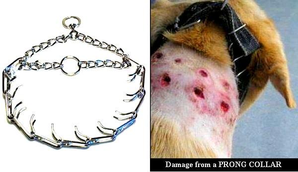 daños collar de pinchos
