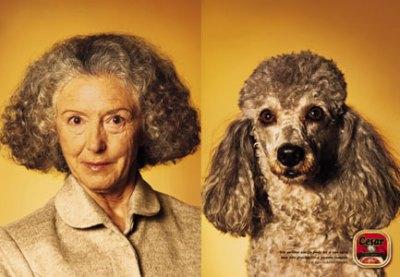 Hunde ähneln Ihrem Besitzer