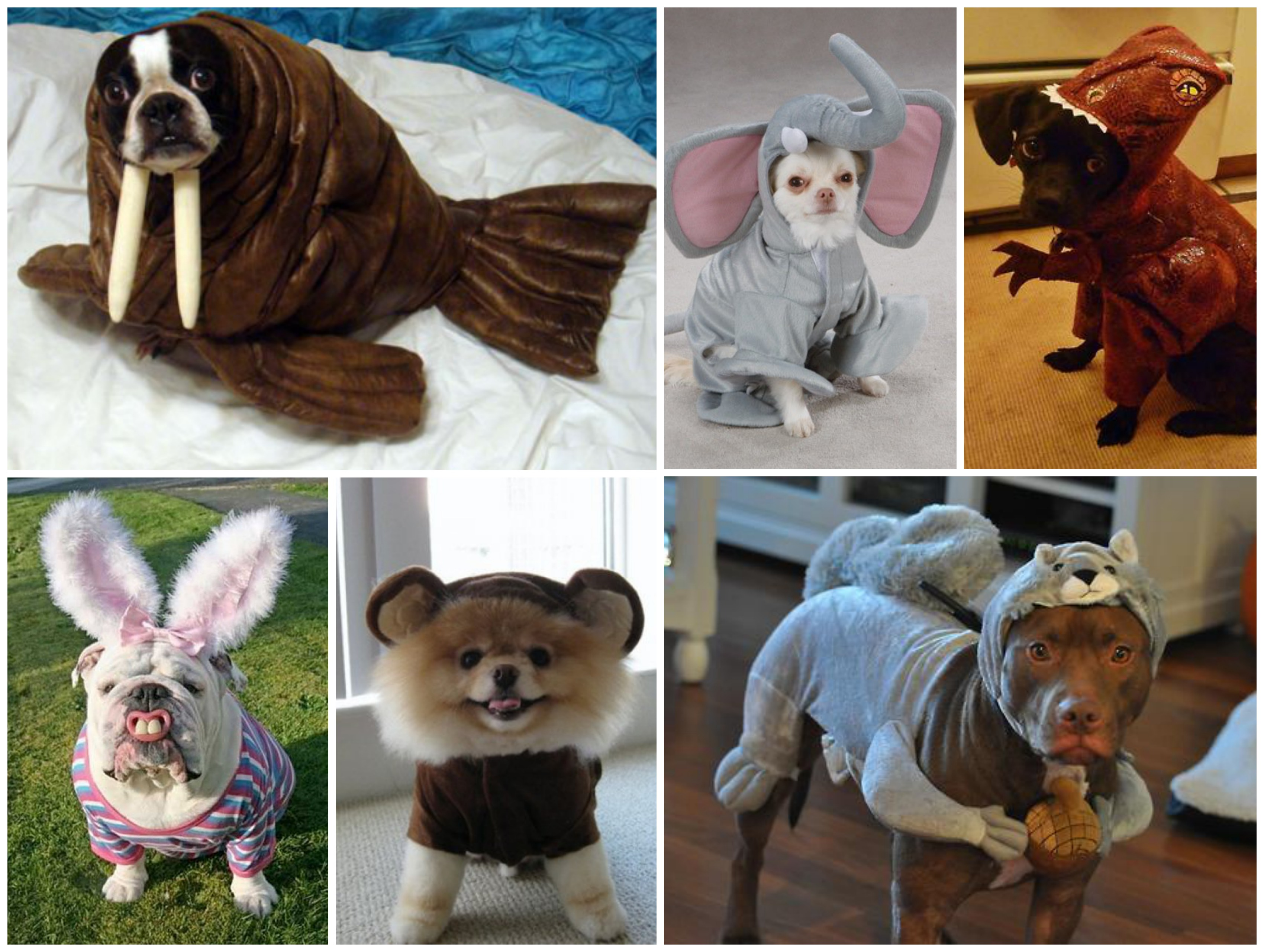 Disfraces animales