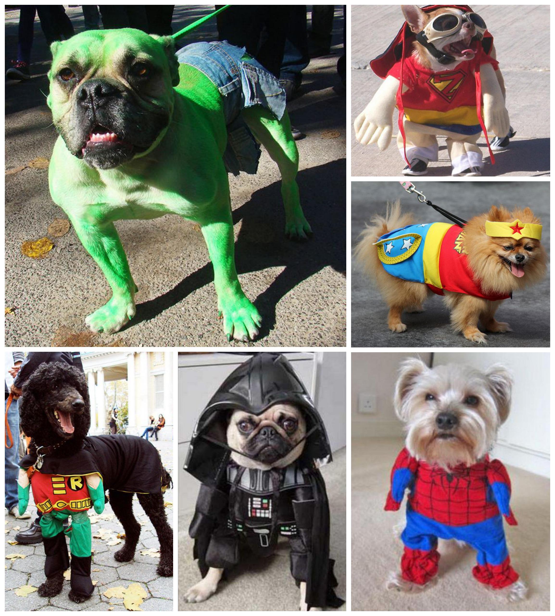chiens déguiés super héros halloween