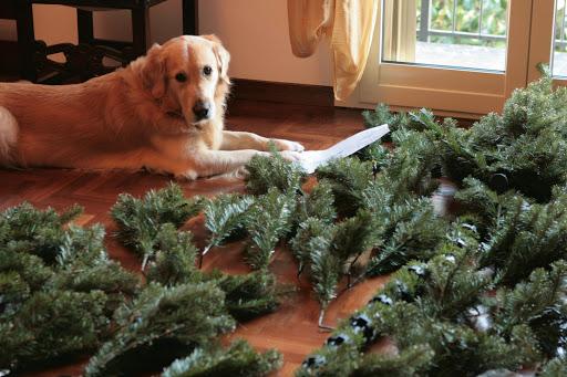 arbol navidad perro