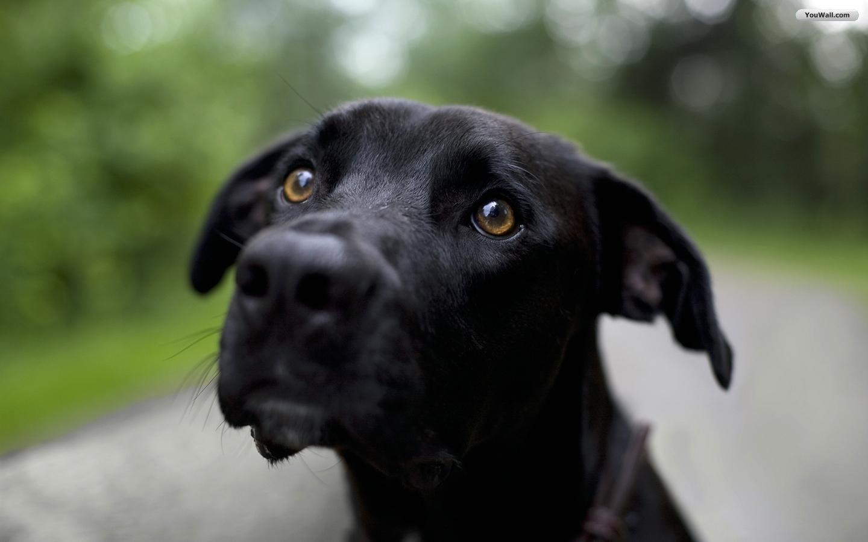 perro negro 1