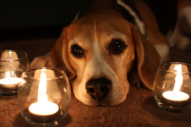 perro y velas