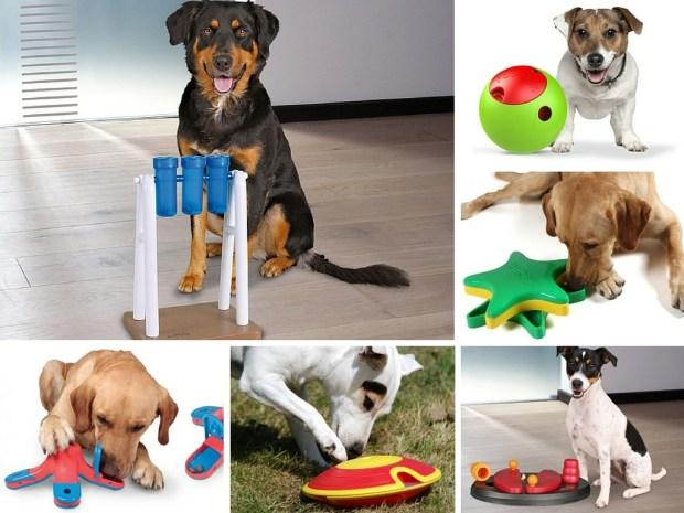 7 Juegos Interactivos Para Perros Gublog