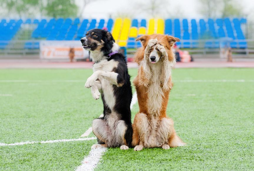 cansar-a-un-perro