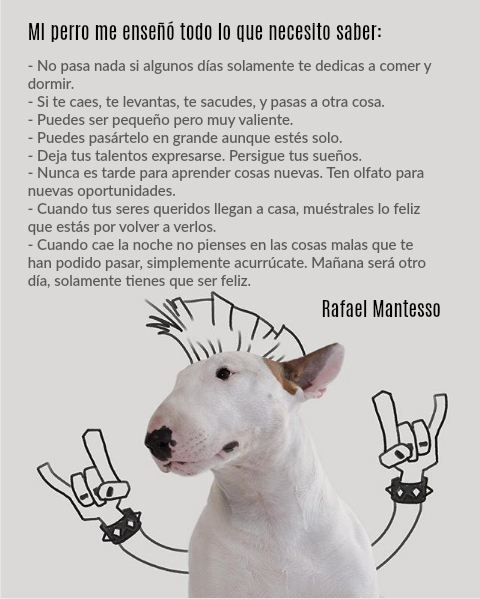 Poster Jimmy el bull terrier Rafael Mantesso