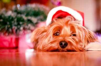 dejar a mi perro durante las navidades