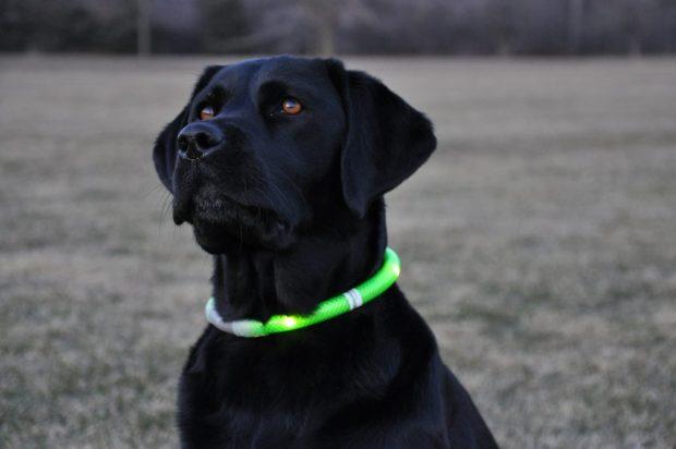 collares luminosos para perros