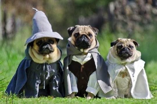 Los hobbits