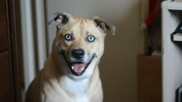 chien-avec-regard-qui-hypnotise