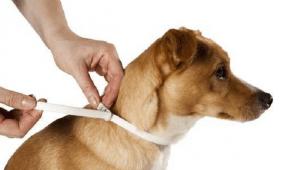 collier anti parasites leishmaniose