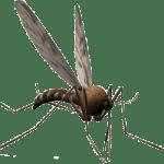 Phlebotomo leshmaniose
