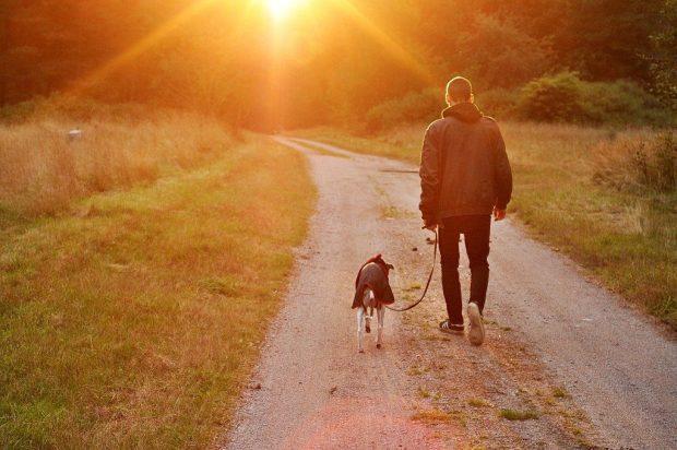 aider chien se dépenser promenade