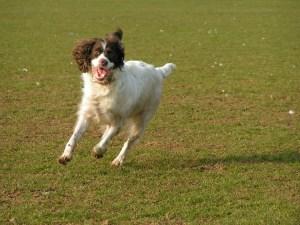 aider un chien à se dépenser anxiété de séparation