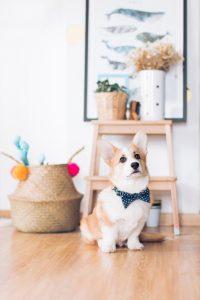 cacher friandises anxiété de séparation chien la-mouette