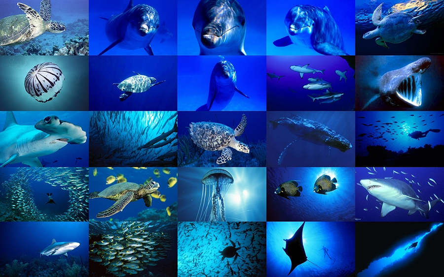 Marine animals in jeddah