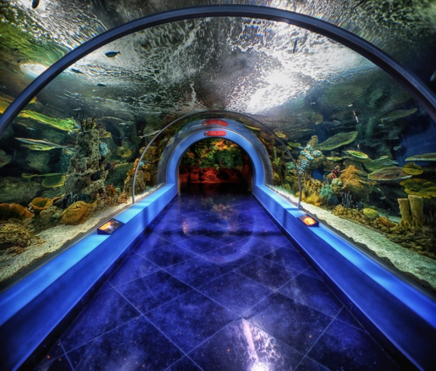Fakieh aquarium tunnel