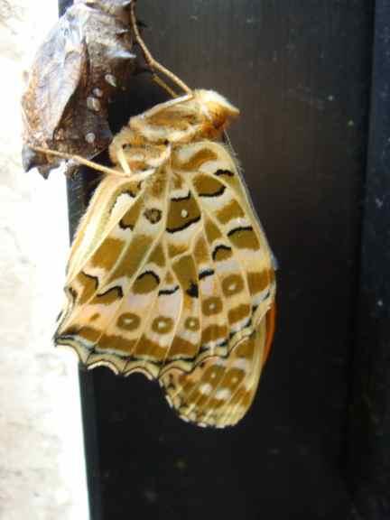 蝶が飛び立ちました