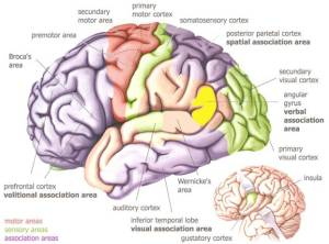 Visual Brain Journey thru the cortex