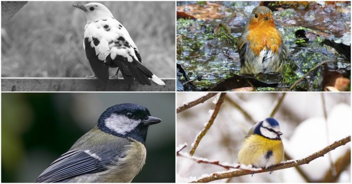 bird photographers on instagram