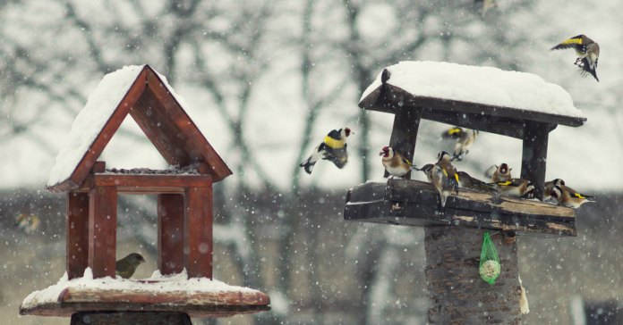 bird-table-in-winter